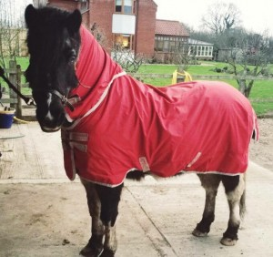 Horse rug cleaning and laundry service in Norfolk
